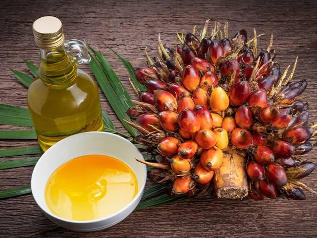 palm yağı ve kalp sağlığı